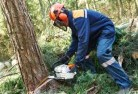 Albert Park SA Tree cutting services 21
